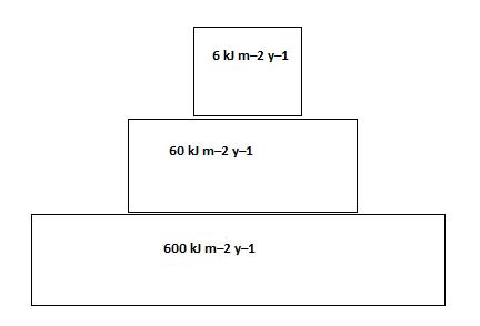 constructing biomass pyramids In this activity you will construct three types of ecological pyramids: a number  a  biomass pyramid is an ecological pyramid that indicates the total mass of.